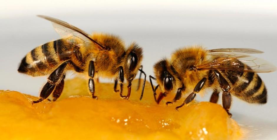 purchase cheap 0bbec a25ab Le nourrissement des abeilles